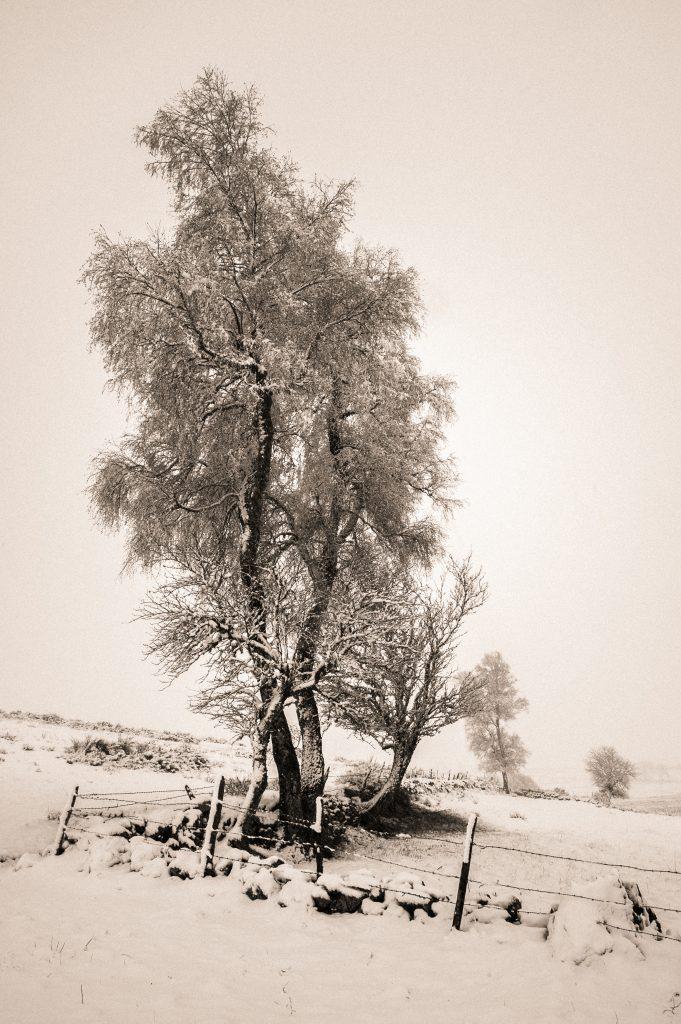 Paysage de neige - Jean-Louis Maillard
